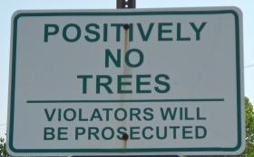 Positively_no_trees,_Leesport_PA