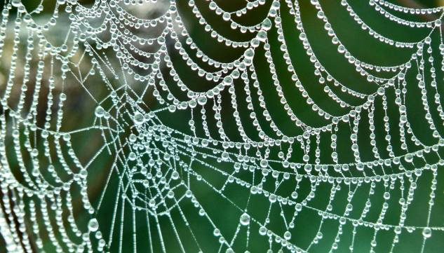 spider-web-droplets_1600