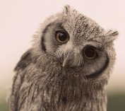 wise-owl-2